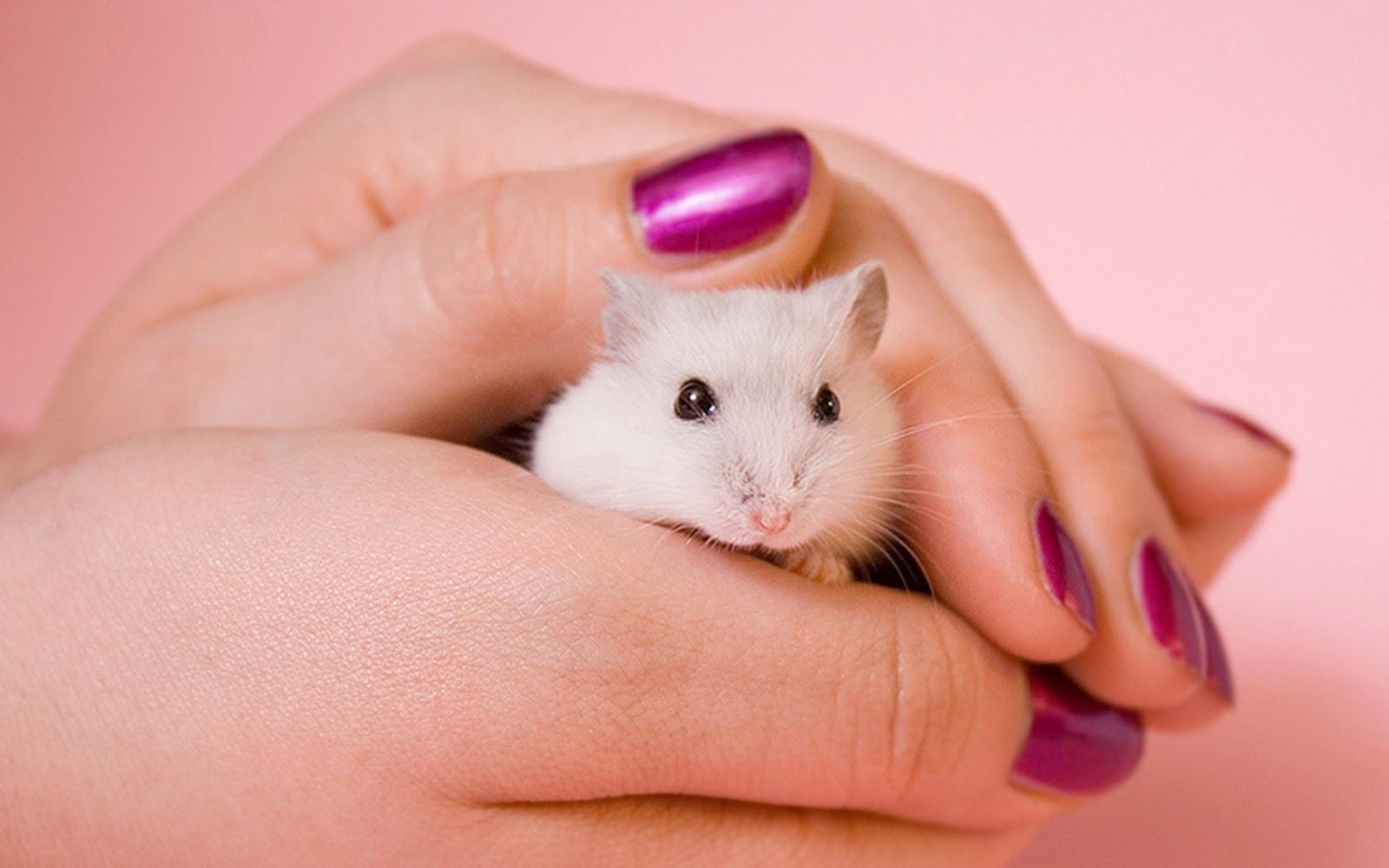 Hamsters achtergronden dieren hd hamster wallpapers foto 3jpg 1600x1000