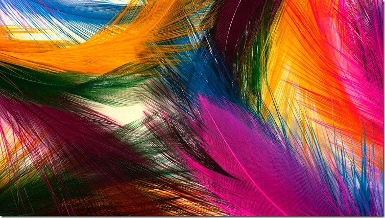 Very Beautiful Colorful feather HD Wallpaper Download Very Beautiful 754x426