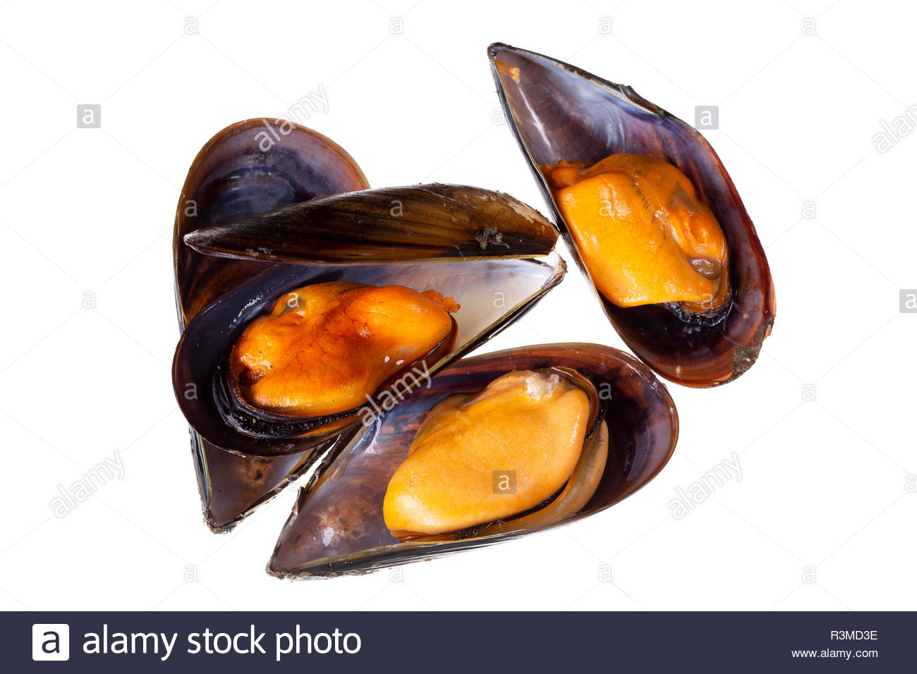 Cooked mussels isolated on white background Mytilidae Mussels 1300x956