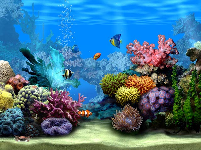 Living marine Aquarium 3D screensaver 640x480
