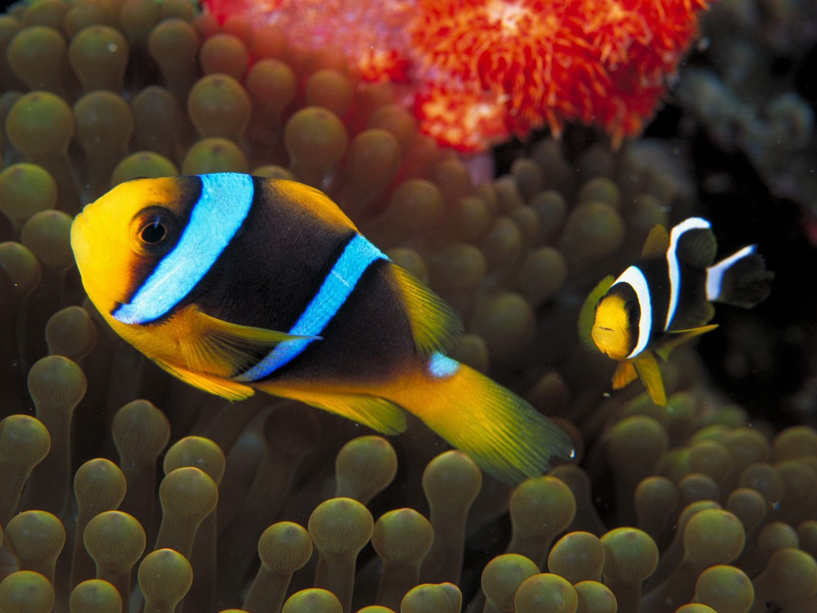 Best Wallpapers Colorful Fish Wallpapers 1600x1200