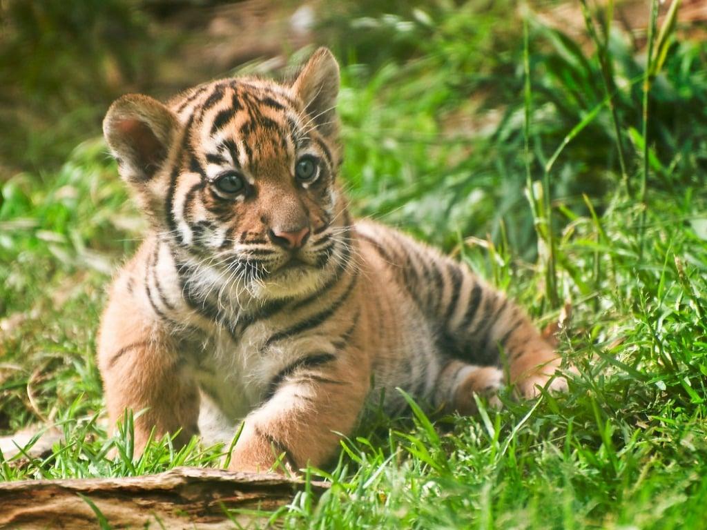 Free cub dating