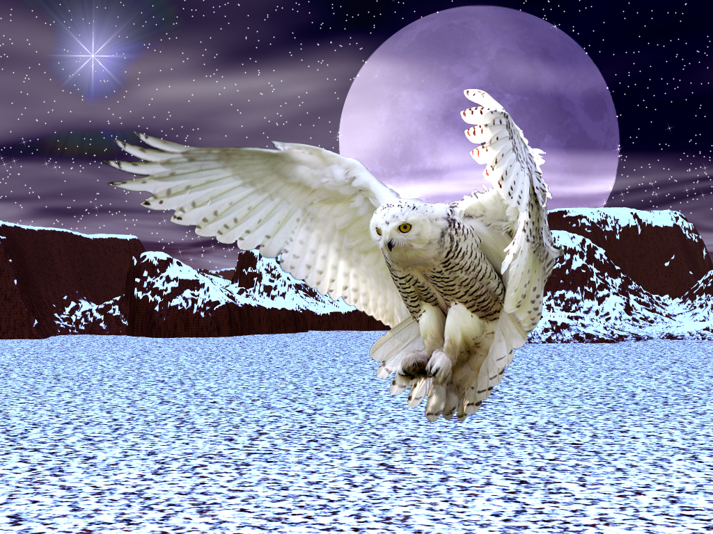 Free Download Snowy Owl Wallpaper 1024x768 For Your