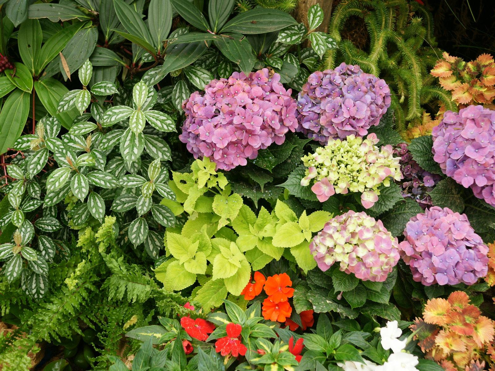 Flower Garden Wallpapers WallpaperSafari