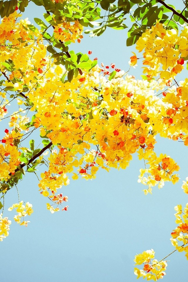 Leaves Summer Wallpaper Wallpapers Feed IPhone Gallery 640x960