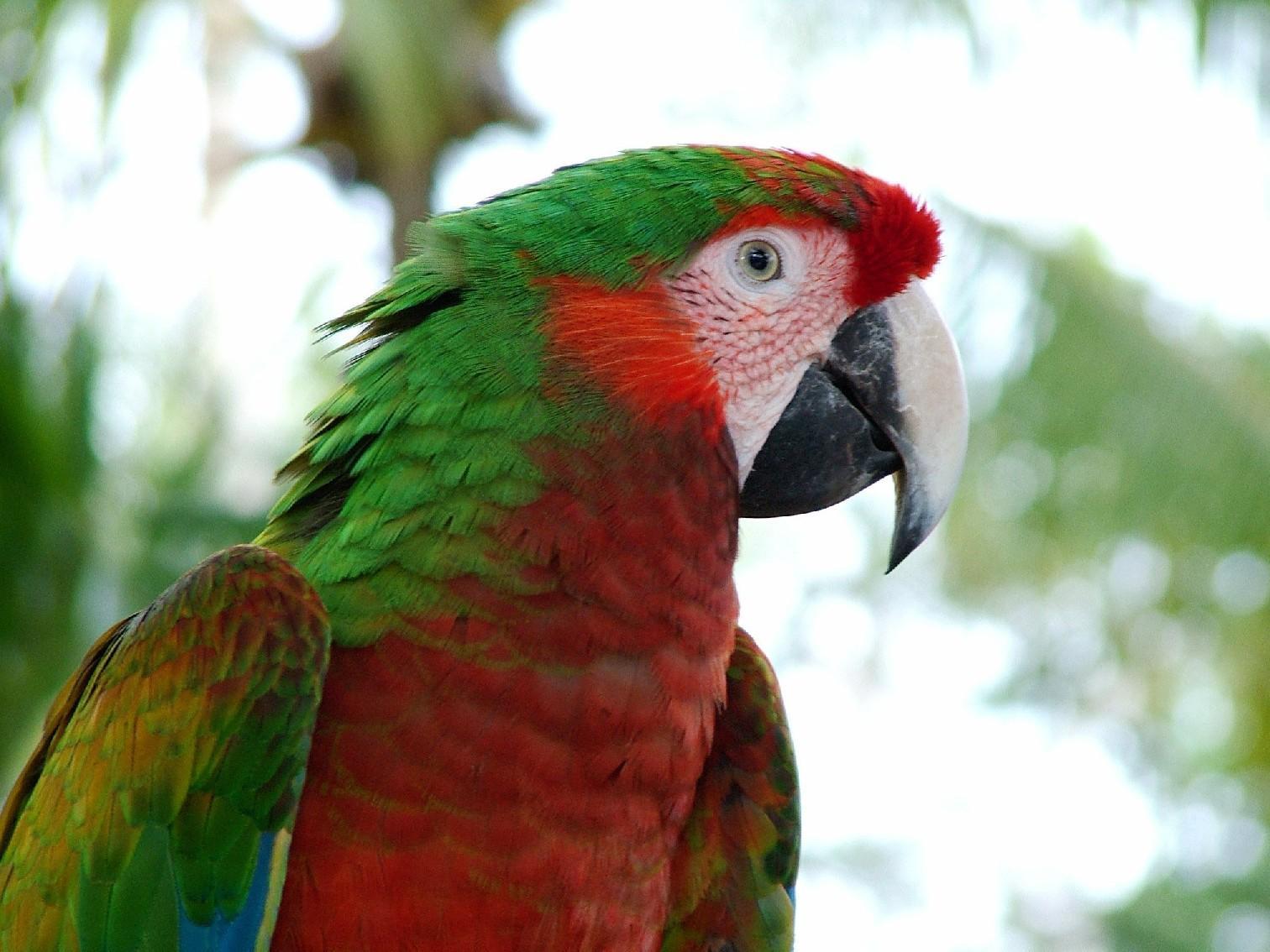 tropical birds wallpaper tropical birds 1512x1134