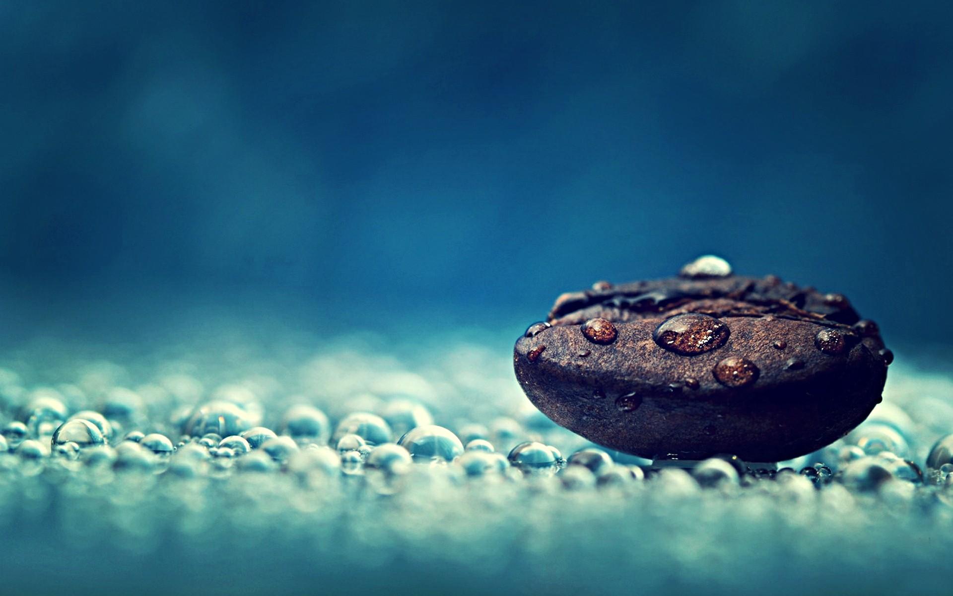 Coffee Photography Water Drops Macro Seeds Dew 74464 HD Wallpaper 1920x1200