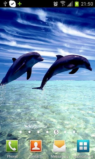 Here are the Dolphin HD live wall paper for all the nature lovers 307x512