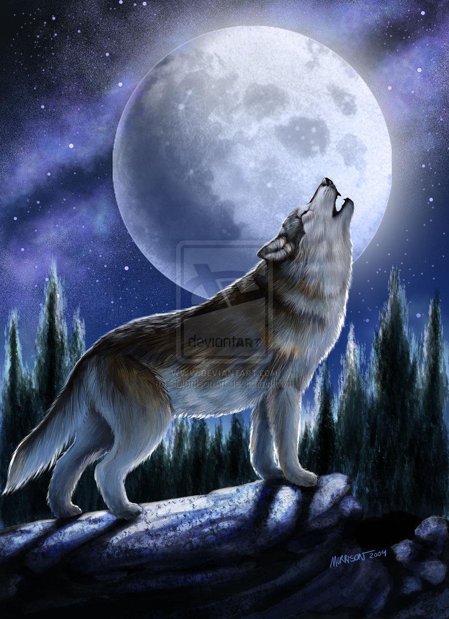 howling wolf by smorrisonart digital art drawings paintings animals 900x1239
