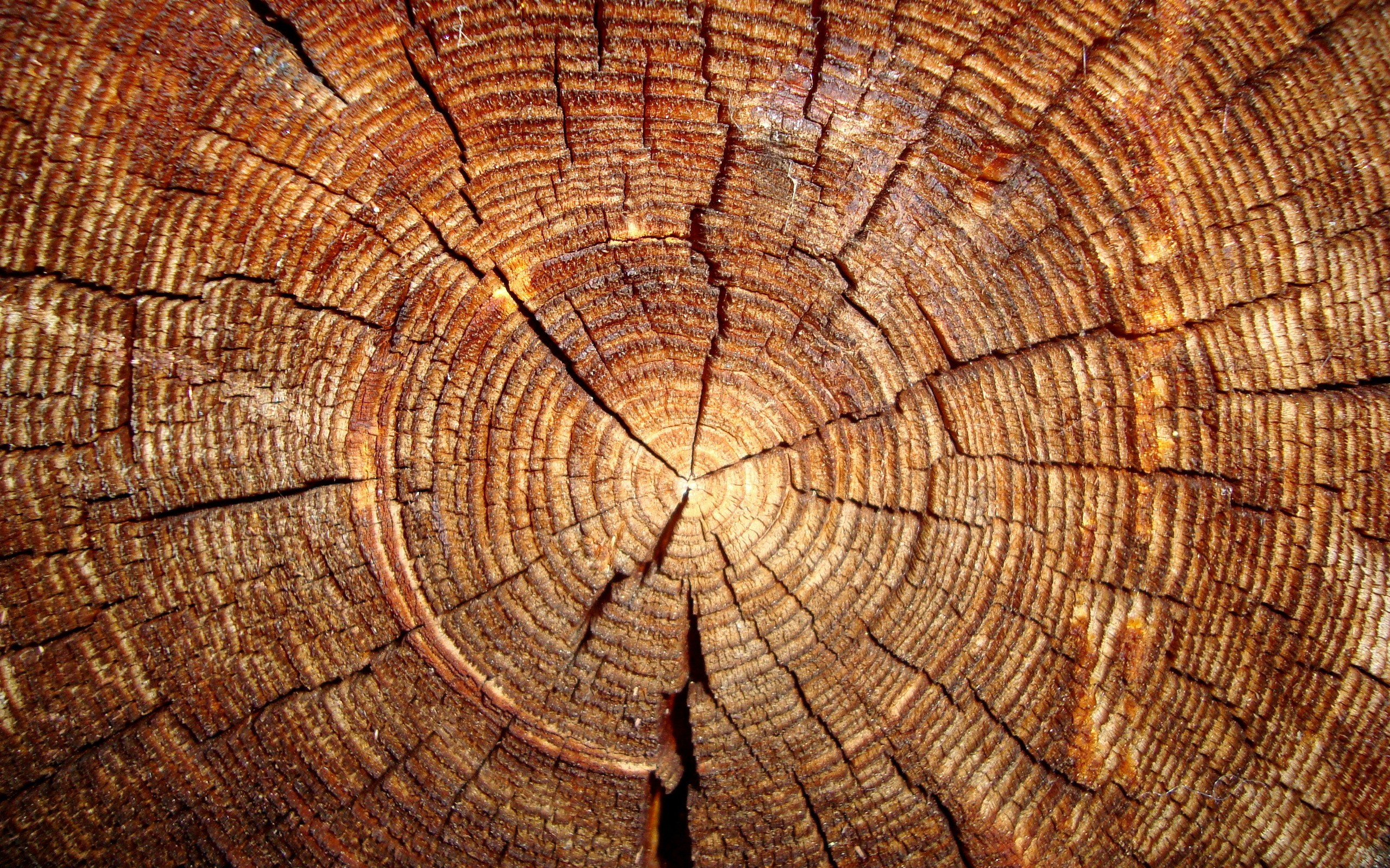 file name wood hd wallpaper 12 download posted category backgrounds 2560x1600