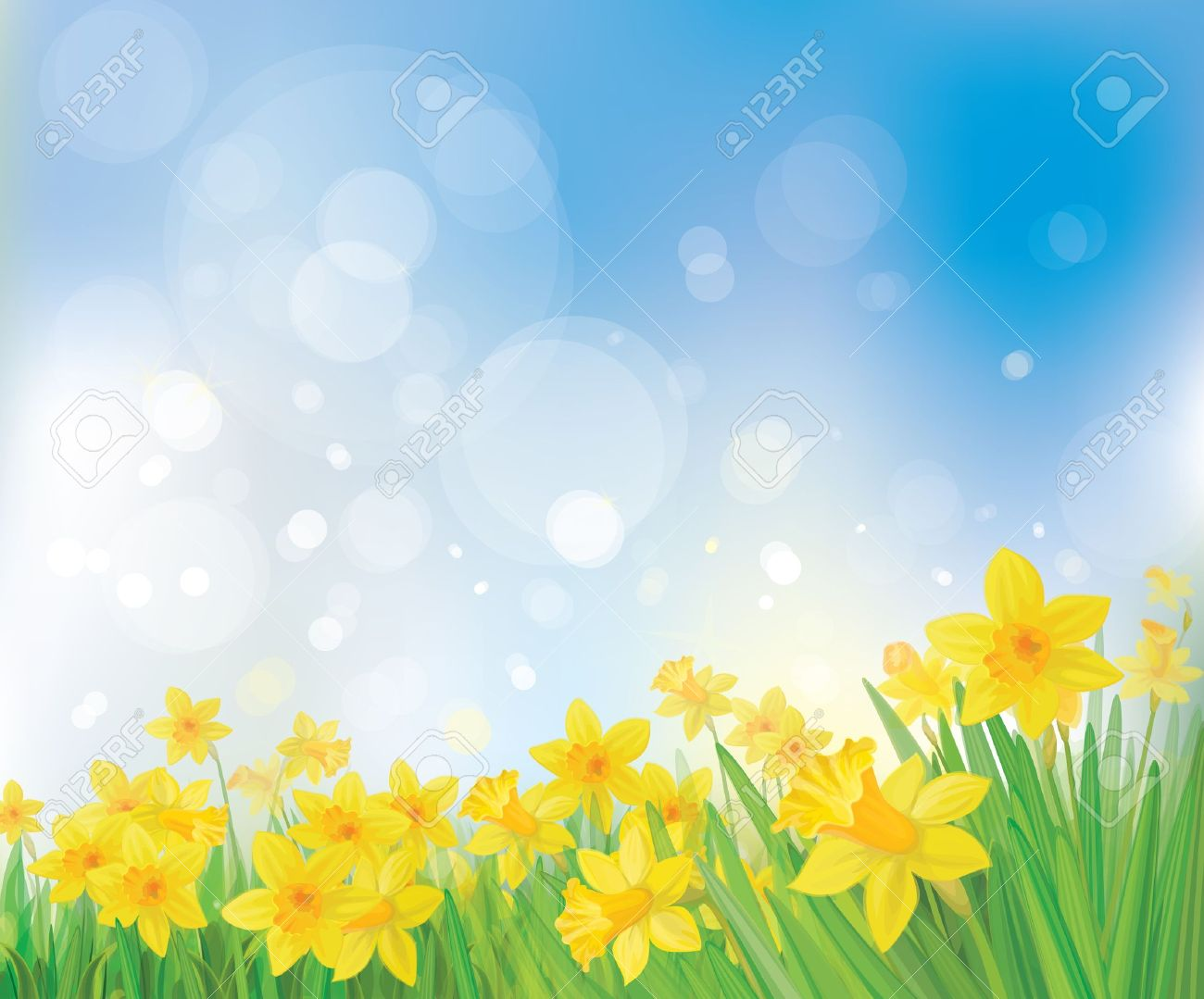 Vector Of Daffodil Flowers On Spring Background Royalty 1300x1079