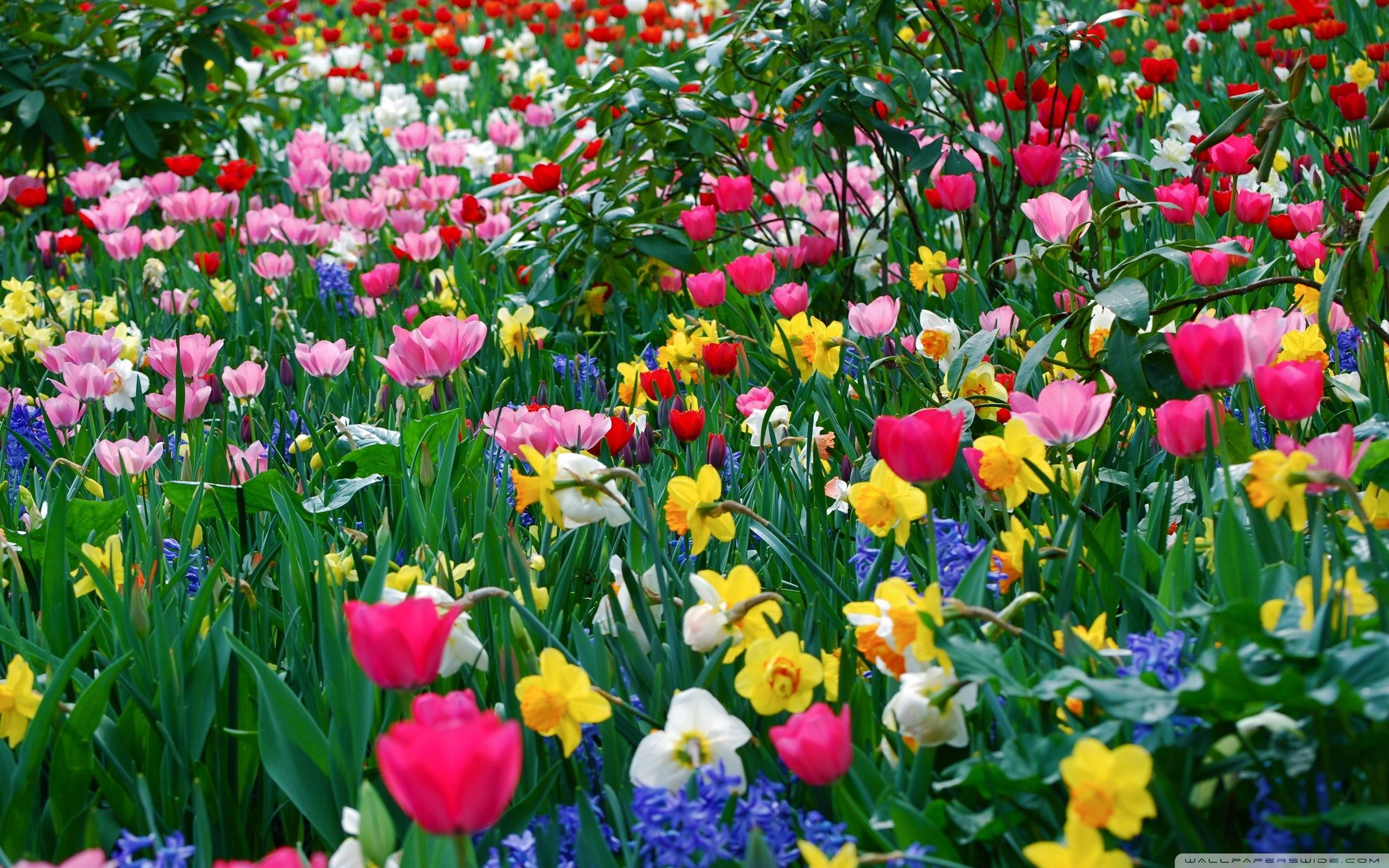 Spring Flowers Backgrounds Desktop 2560x1600
