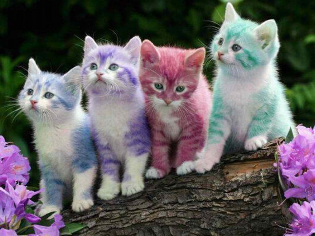 Free Download Download Lovely And Beautiful Cats Hd Wallpapers Hd 1024x768 For Your Desktop Mobile Tablet Explore 76 Baby Kitten Wallpaper Cute Kittens Wallpapers Free Kittens Wallpaper For Desktop