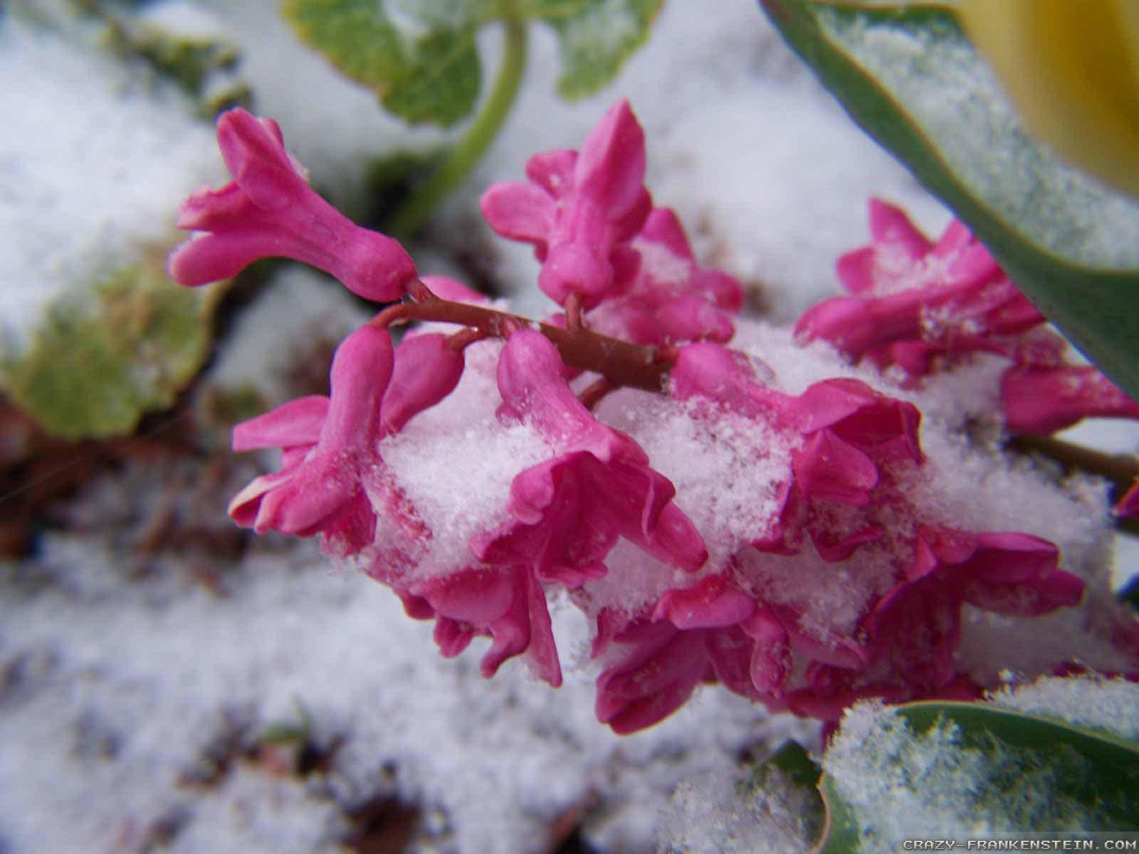 Winter Flowers Wallpapers Wallpapersafari