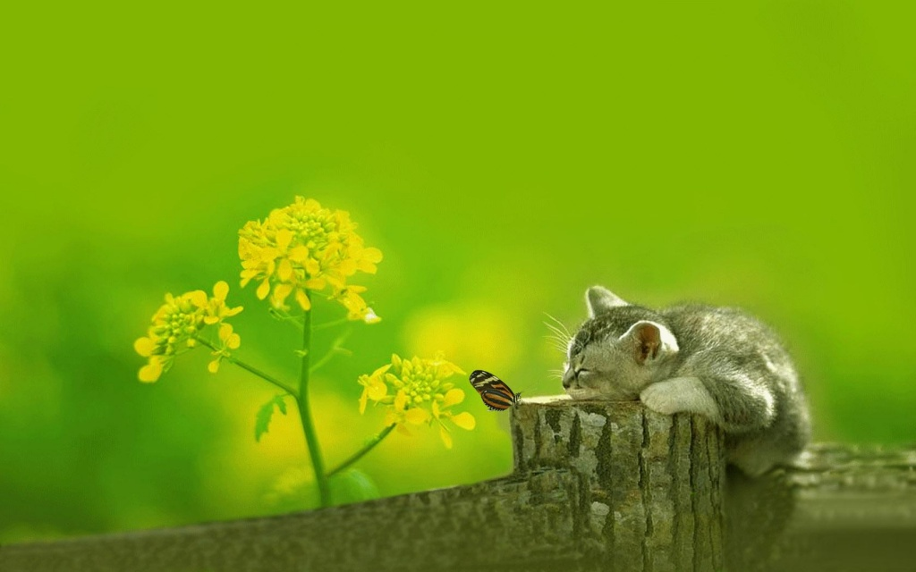 Cat and Butterfly HD Wallpaper Download Cat and Butterfly HD Wallpaper 1024x640