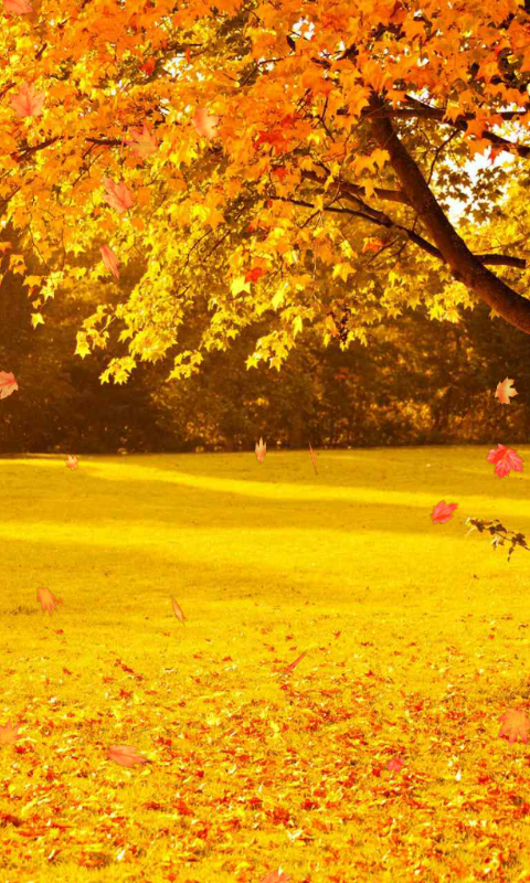 Free Download Autumn Wallpaper Android Apps On Google Play 480x800 For Your Desktop Mobile Tablet Explore 96 Portraits Wallpapers Portraits Backgrounds Portraits Wallpapers Presidential Portraits Wallpapers