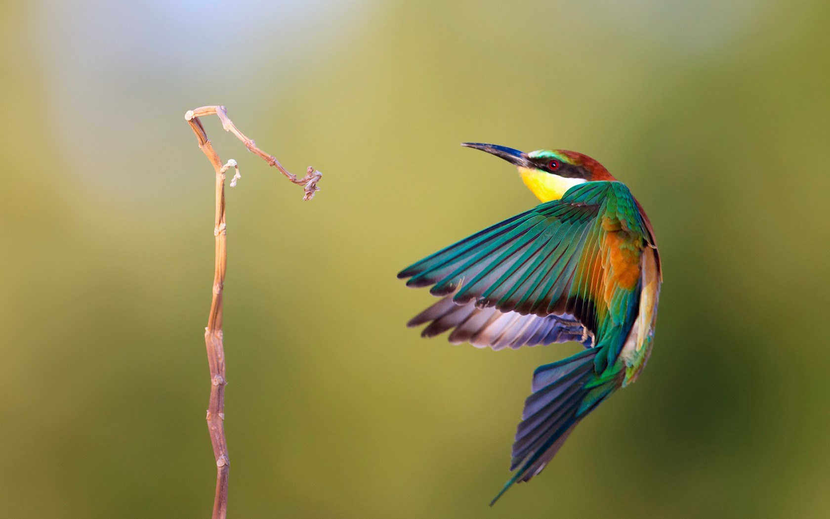 Gallery For gt Birds Wallpapers Hd 1680x1050