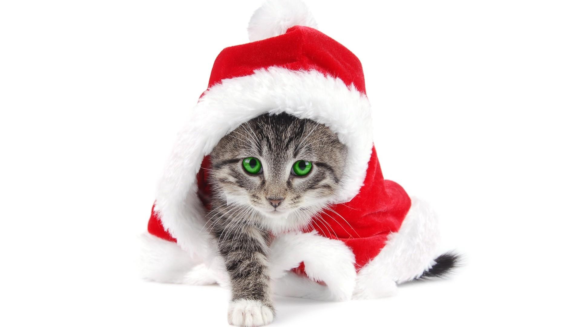 Cute Christmas 760 1920x1080 px 1920x1080