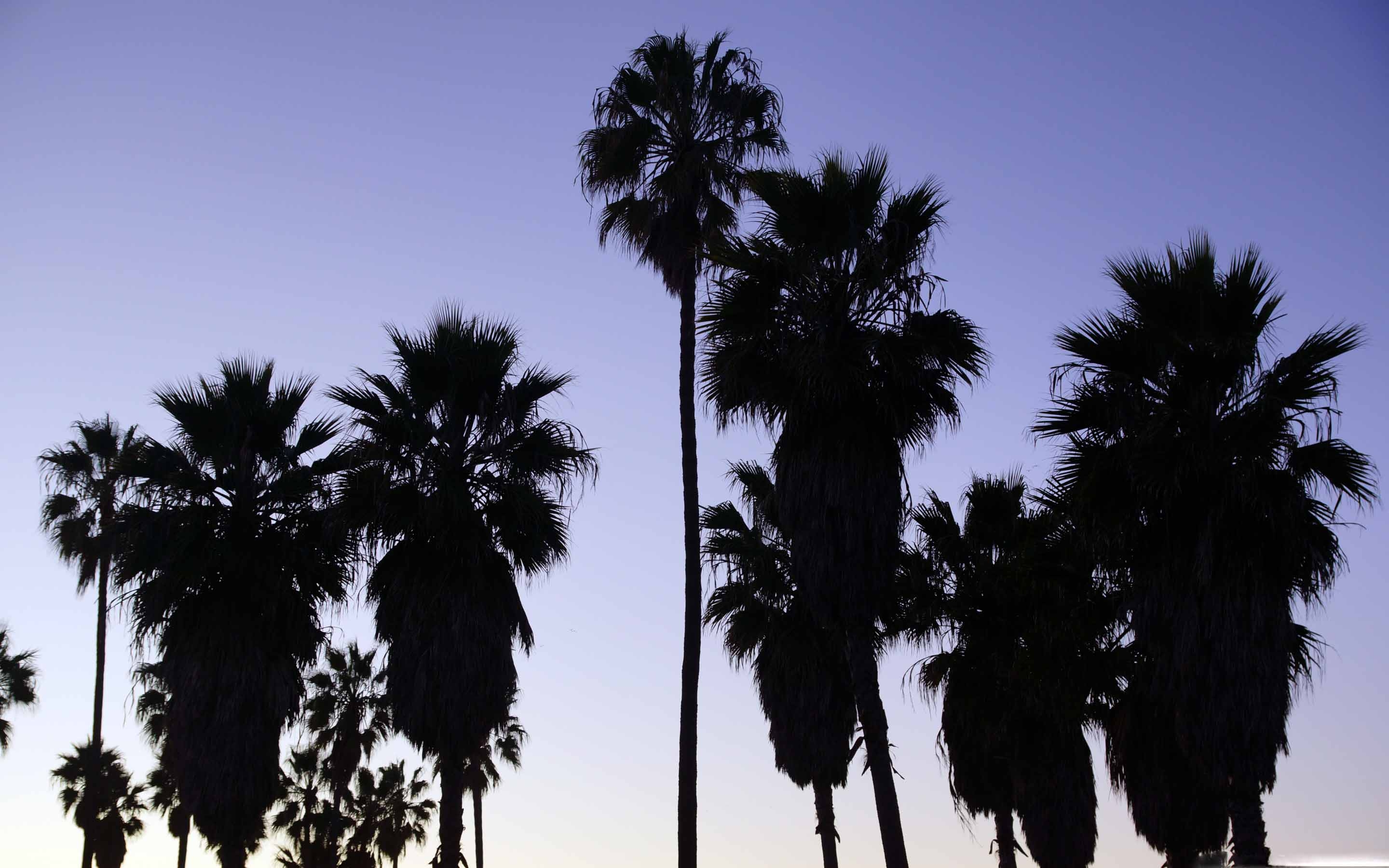 Palm Trees Venice Beach Los Angeles Mac Wallpaper Download 2880x1800