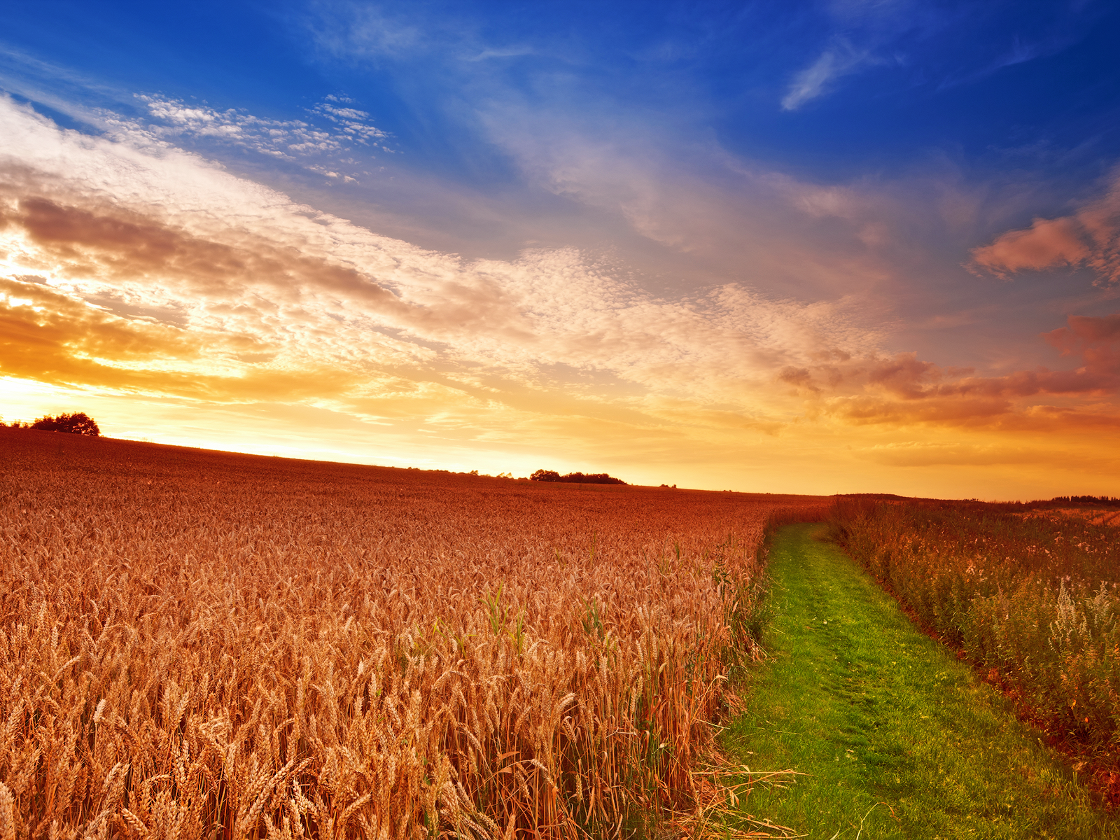 Farm Country Field wallpaper Conservatives Weave a 1600x1200