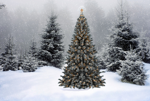 Wallpaper christmas new year christmas tree snow winter forest 590x400
