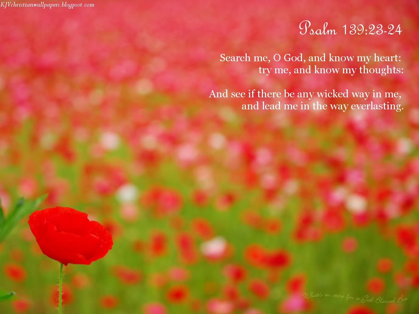 Psalm 13923 24 Wallpaper   Christian Wallpapers and Backgrounds 1600x1200