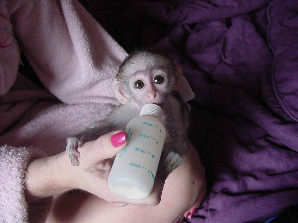 Puppy Monkey Baby Wallpaper Wallpapersafari