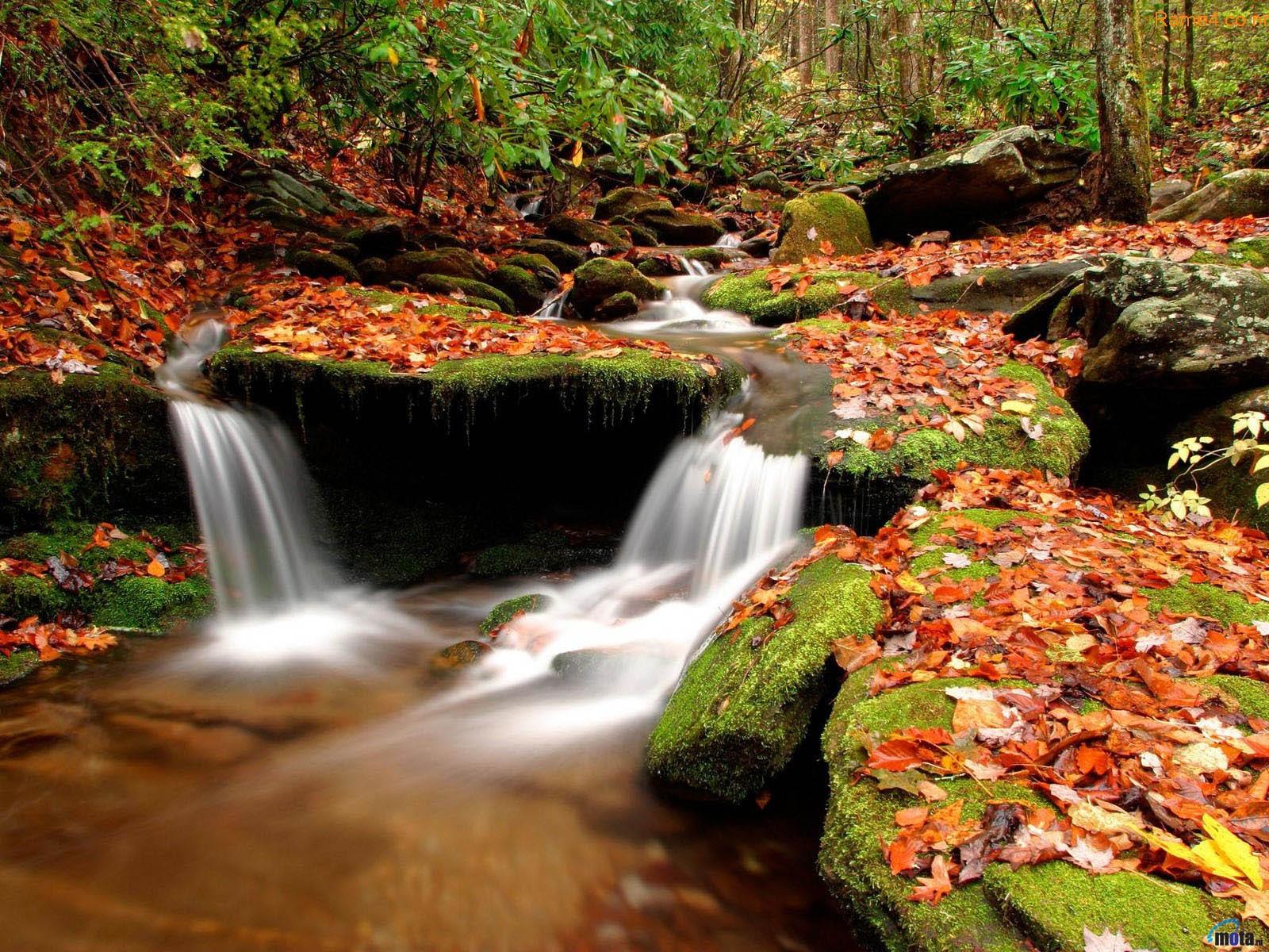 Amazing Nature Wallpaper HD For Desktop ZLLOX 1600x1200