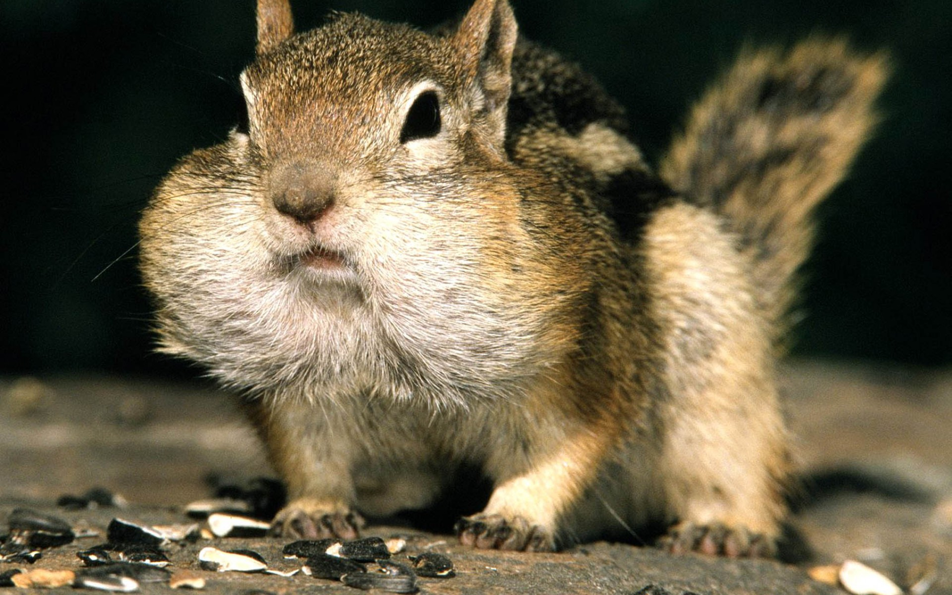 Animals Squirrel Hd Animal Wallpapers Pet Love Cool Animals 1920x1200