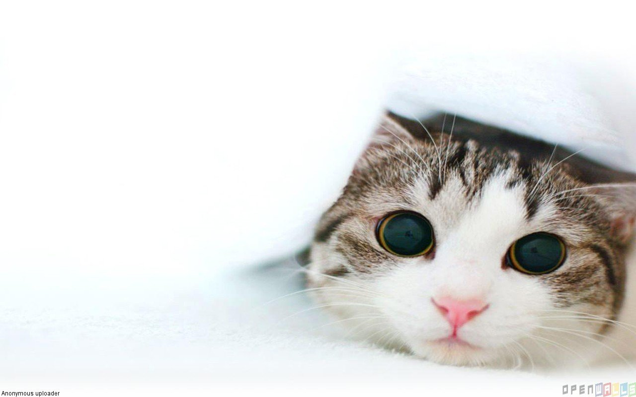 Cute kitten wallpaper 18417   Open Walls 1280x800