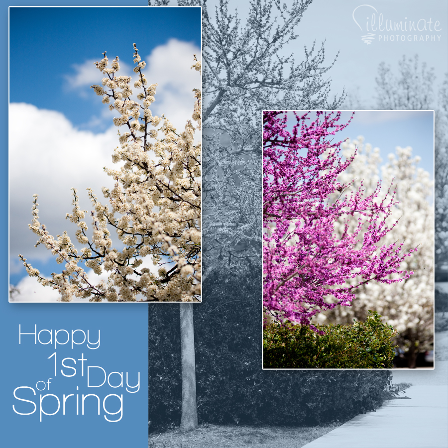 happy first day of spring   Large Images 900x900