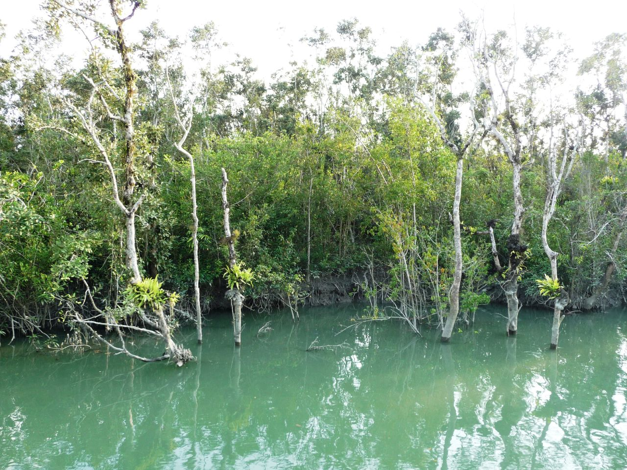SundarbansNationalParkoriginal13489jpg   Thousand Wonders 1280x960
