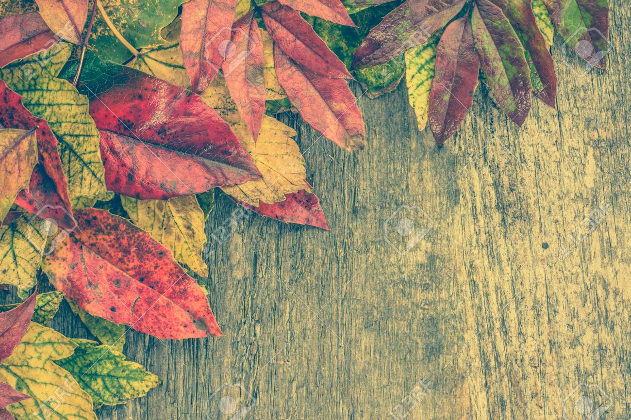 Autumn Leaves Background Fall Wallpaper With Colorful Leaves 1300x866