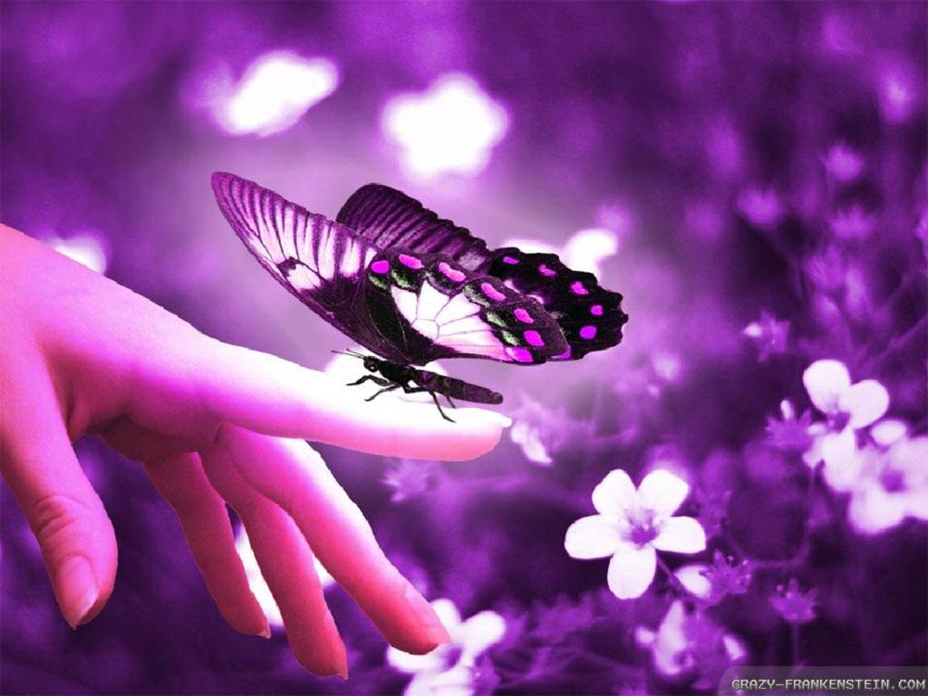 ... Flowers And Butterflies Wallpaper 1024x768 | Full HD Wallpapers