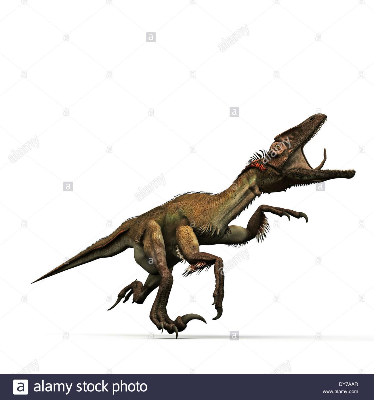 utahraptor isolated on white background Stock Photo 68388623   Alamy 1300x1390