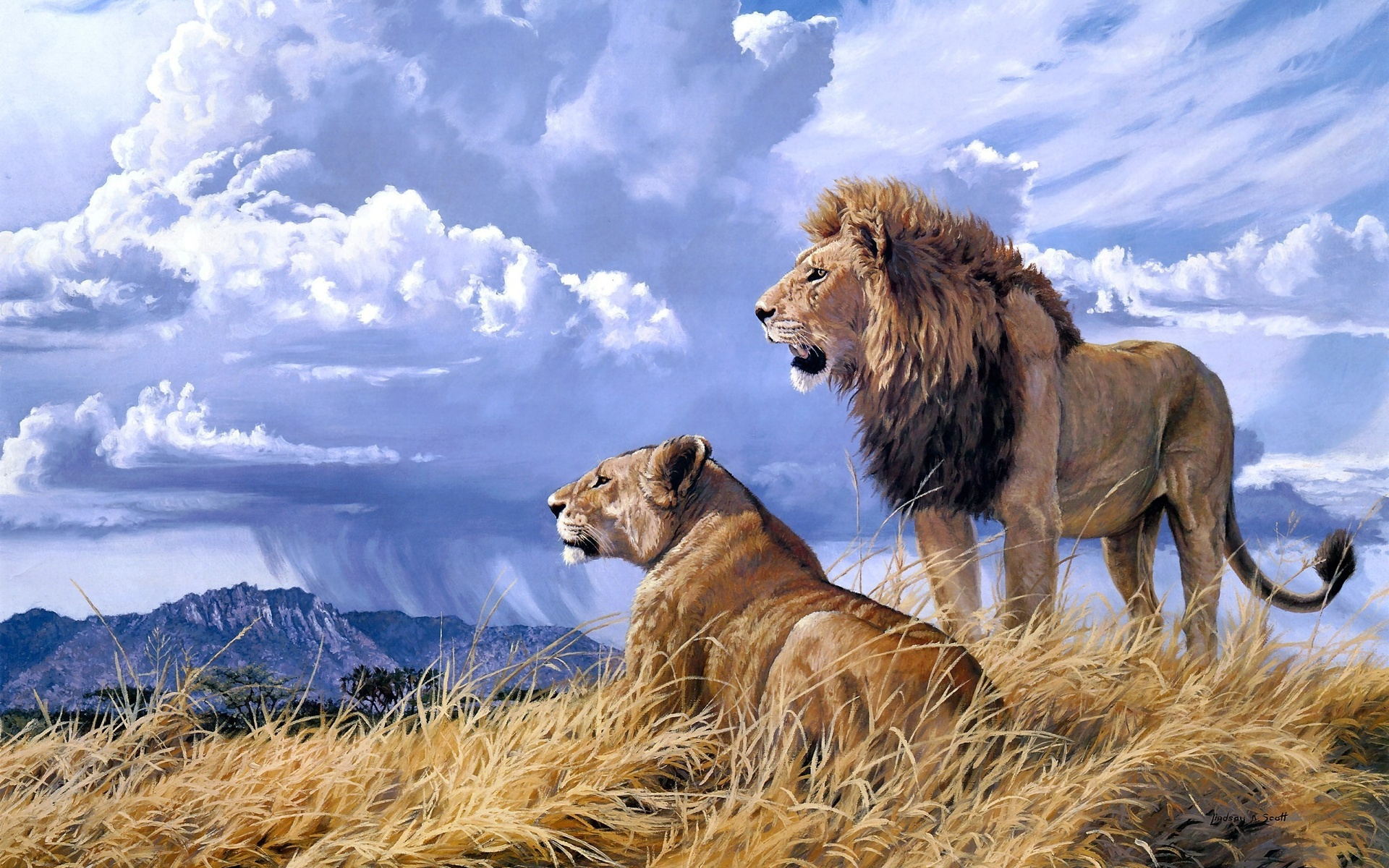 nature animal animals wildlife lion cats africa painting landscape wallpapersafari grass