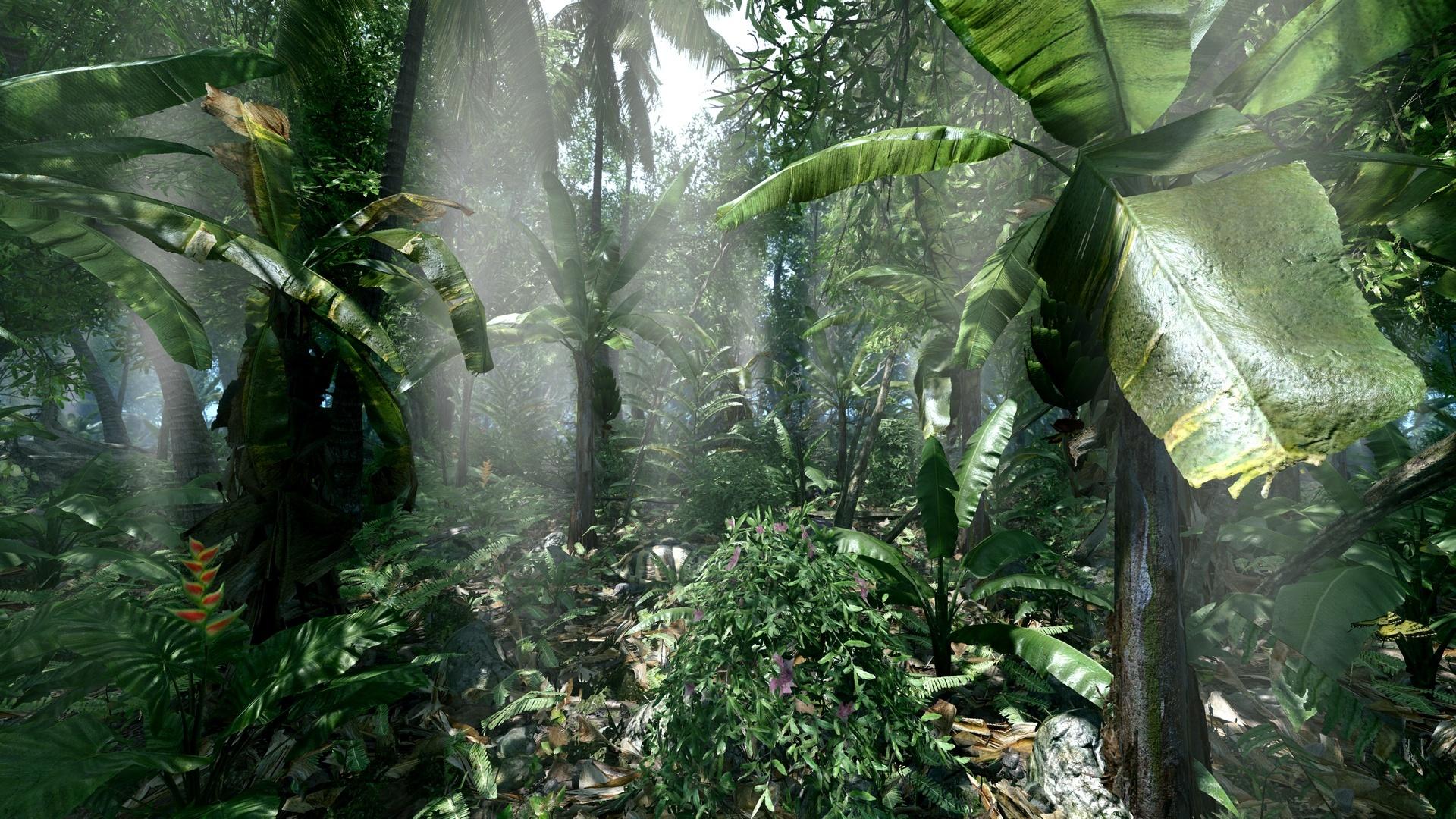 Jungle Wallpaper Desktop: Jungle Background