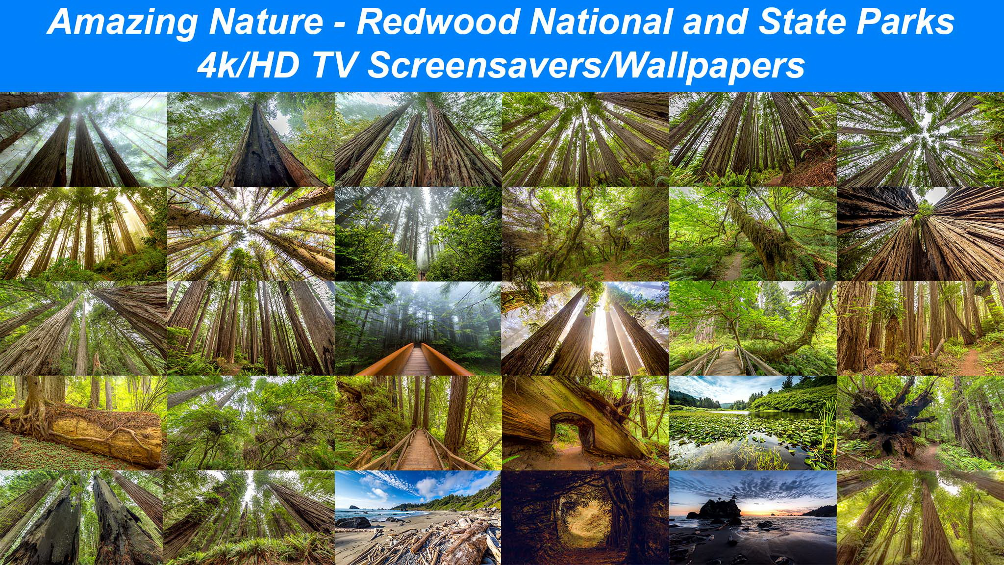 Amazing Nature Redwood National and State Parks 1 4KHD 2048x1152