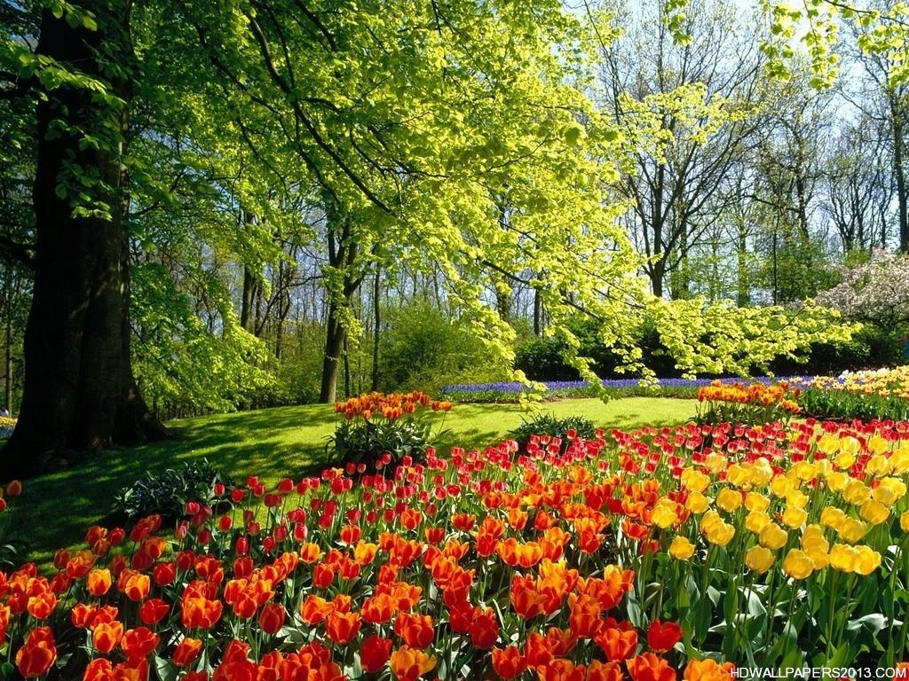 HD Flower Wallpapers HD Wallpapers HD Flower Wallpapers HD 1024x768