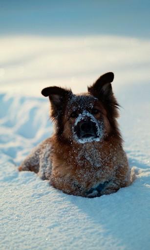 Dogs in the Snow Wallpaper - WallpaperSafari