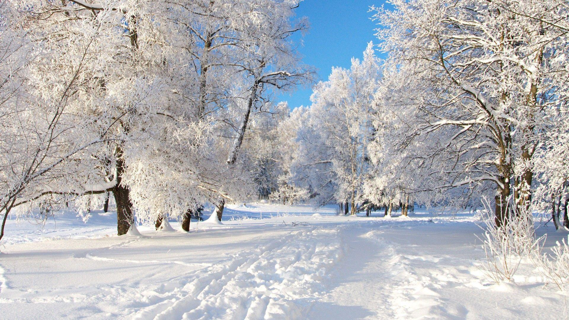 Winter Snow Backgrounds 1920x1080