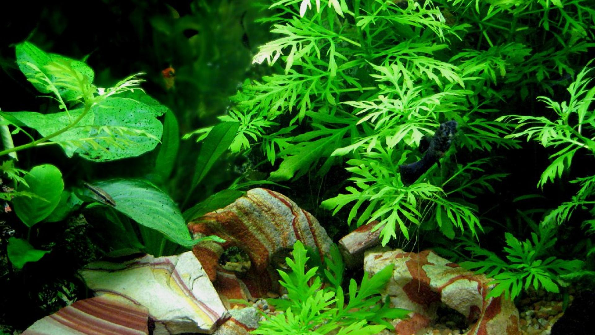 Fish Tank HD Wallpaper - WallpaperSafari