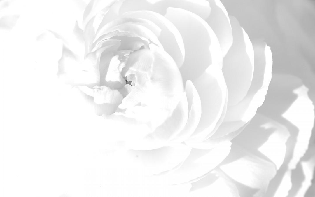 Flower Art White Background Hd Wallpaper Of Hdwallpaper2017