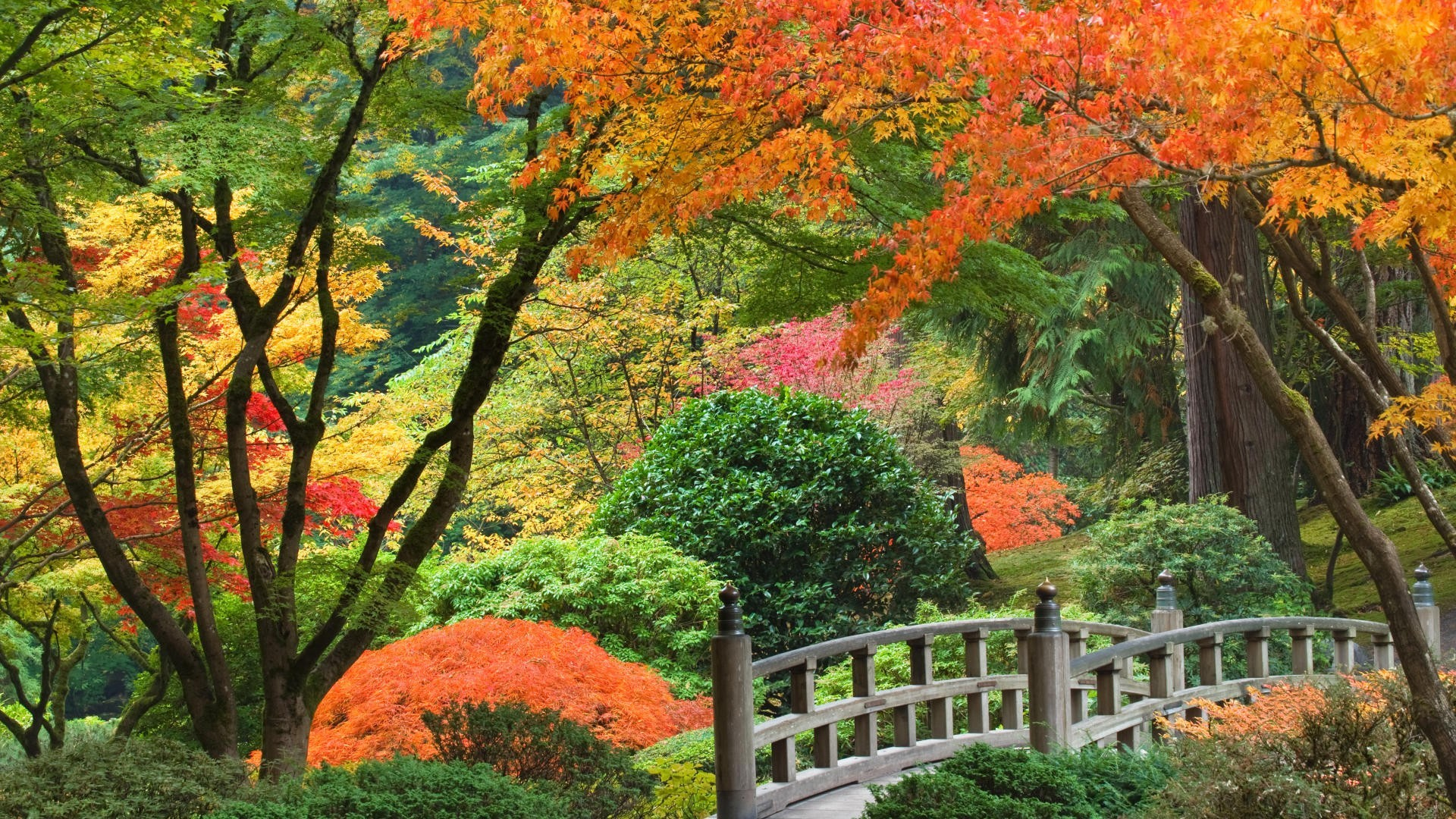 Japanese garden wallpaper 3379 1920x1080