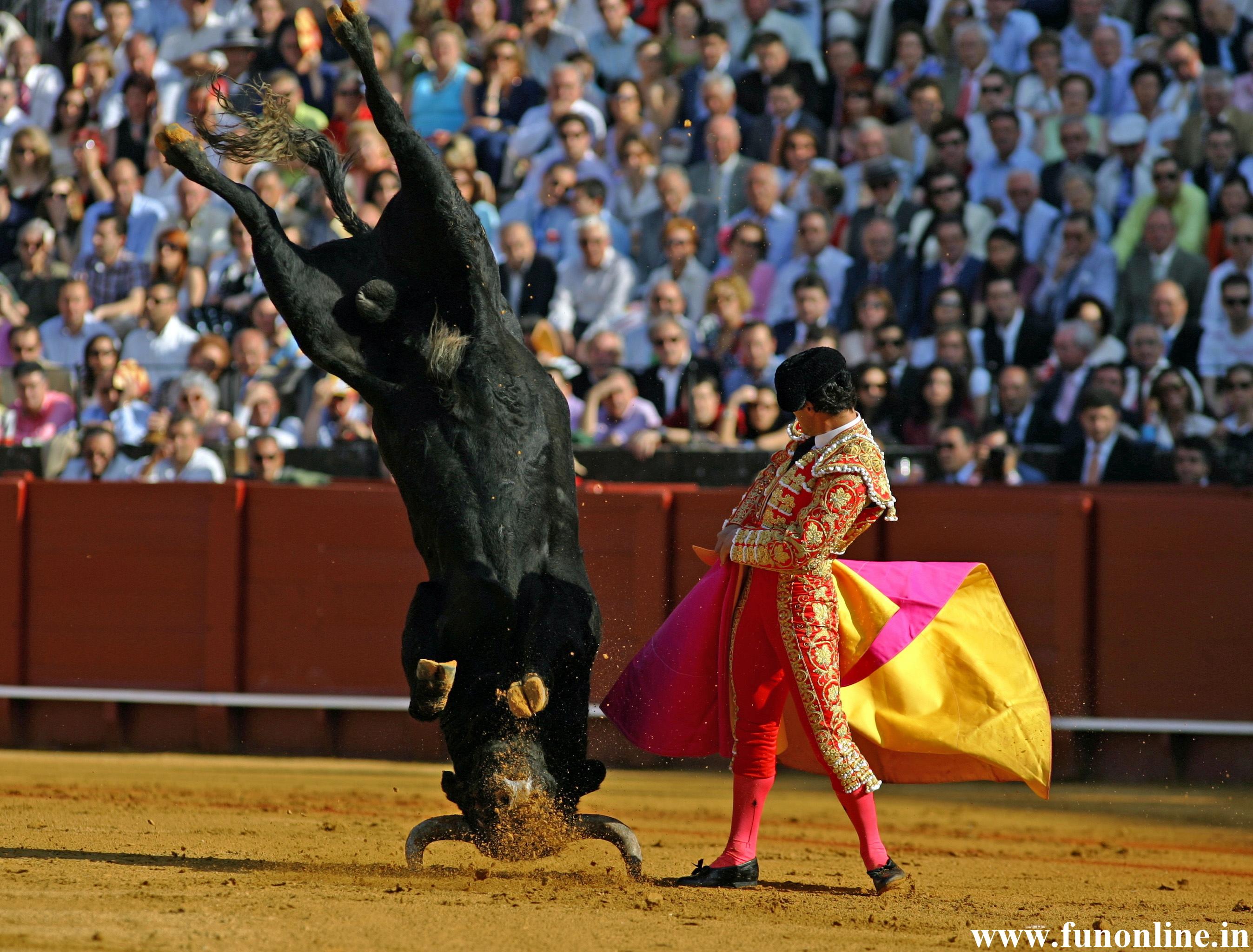bull fighting 1920x1080 hd - photo #21