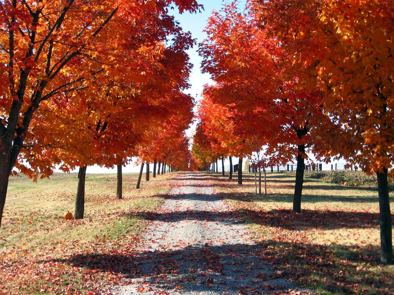 Fall Nature Wallpaper Wallpapersafari