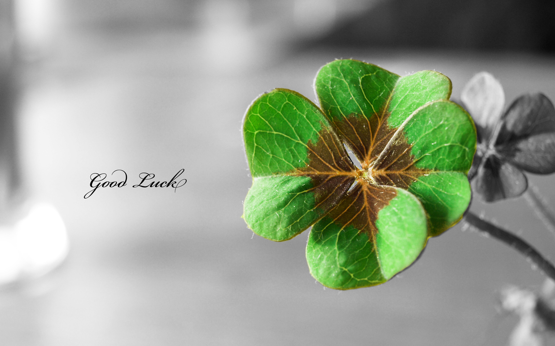 Four Leaf Clover   Wallpaper High Definition High Quality 1920x1200