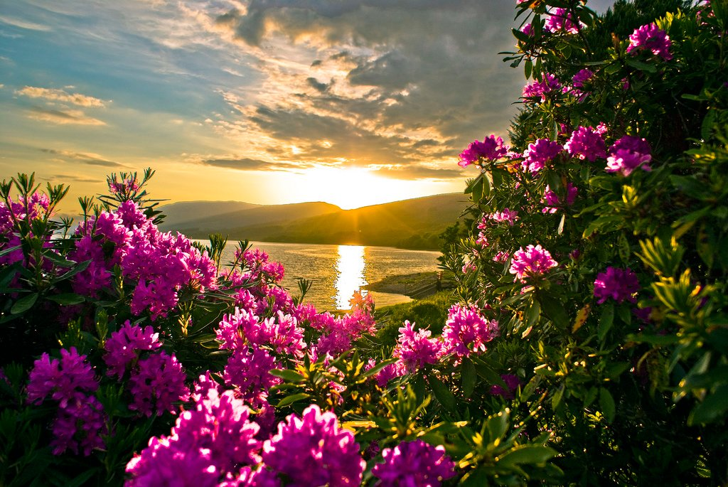 sunset spring flower wallpaper spring vilage flower wallpaper spring 1024x685