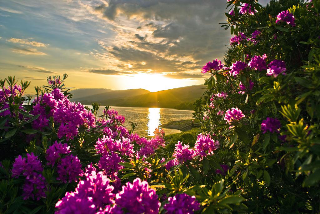 spring flowers screensavers - photo #31