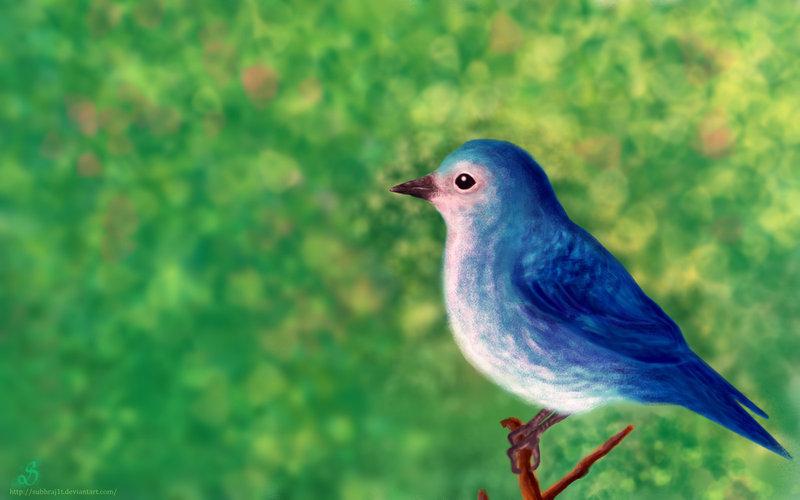 Liitle blue bird wallpaper by SubhrajitDatta 800x500